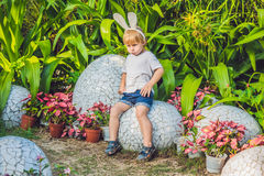 Cute little kid boy with bunny ears having fun with traditional Easter eggs hunt, outdoors. Celebrating Easter holiday. Toddler fi Royalty Free Stock Photography