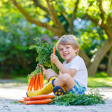 Cute little kid boy with carrots in domestic garden Royalty Free Stock Photo