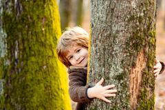 Free Cute Little Kid Boy Enjoying Climbing On Tree On Autumn Day. Cute Child In Autumnal Clothes Learning To Climb, Having Royalty Free Stock Photo - 194010265