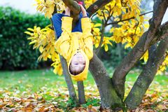 Little kid boy in colorful clothes enjoying climbing on tree on royalty free stock photography