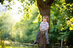 Cute little kid boy enjoying climbing on tree stock photos