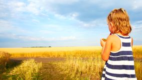 Cute little kid eating a cucumber in the field. Kids eat vegetables outdoors. Healthy snack for children stock video