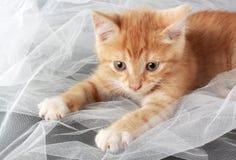 Cute little kitten Stock Images