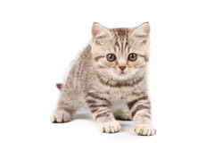 Cute little kitten. Isolated over white background Stock Photography
