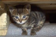 Cute little kitten Royalty Free Stock Image