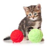 Cute little kitten Royalty Free Stock Photos