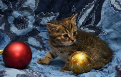 Cute little kitten on a blue background Royalty Free Stock Photo