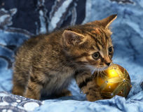 Cute little kitten on a blue background Royalty Free Stock Photos