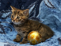 Cute little kitten on a blue background Stock Images