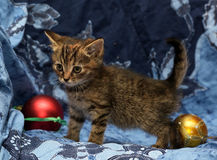 Cute little kitten on a blue background Royalty Free Stock Images
