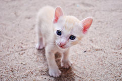Cute little kitten. Royalty Free Stock Images