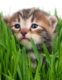 Cute little kitten Stock Photos