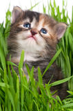 Cute little kitten Royalty Free Stock Photography