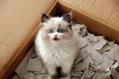 Cute little kitten in cardboard box,. Closeup royalty free stock photography