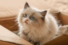 Cute little kitten in cardboard box,. Closeup stock photos
