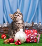 Cute little kitten. With Christmas gifts over blue background Royalty Free Stock Image