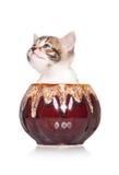 Cute kitten Royalty Free Stock Photography