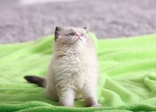 Cute little kitten on color plaid at home,. Closeup royalty free stock photography