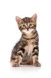 Cute little kitten Royalty Free Stock Image