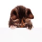 Cute little kitten with empty board Stock Images