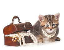 Cute little kitten Stock Images