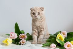 Cute little kitten with flowers bouquet. Copy space. Banner, holidays, Mother`s Day, Valentines Day and Happy birthday concept stock photo