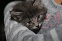 Cute little kitten. Cute little grey kitten with blue eyes snuggled in a sweater Royalty Free Stock Photography