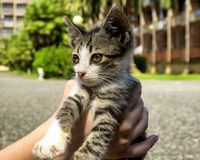 Cute little kitten in hands. Cute little homeless kitten is in kind human hands. Summer time Royalty Free Stock Photo