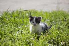 Cute little kitten on the lawn. A portrait of a young kitten on the lawn Stock Photos
