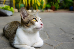 A cute little kitten looking at the sky. A cute little kitten looking up. There are available space on the right for use Stock Image
