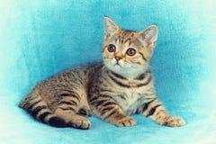Cute little kitten lying the blanket Stock Photo