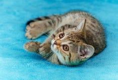 Cute little kitten lying the blanket Stock Images