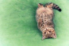 Cute little kitten lying on the  blanket Royalty Free Stock Photos