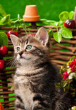 Cute little kitten Stock Photo