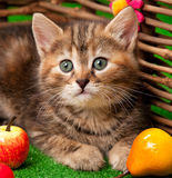 Cute little kitten. Near decorative wattle fence over the bright grass background Stock Photo
