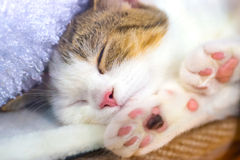 Cute little kitten with pink paws Royalty Free Stock Images