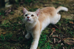 A cute little kitten playing around Stock Images