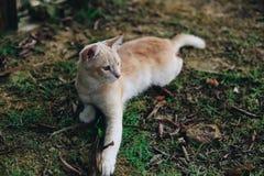 A cute little kitten playing around Stock Photo