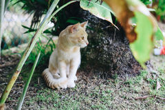 A cute little kitten playing around Royalty Free Stock Photo