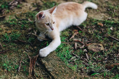 A cute little kitten playing around Stock Photo