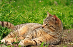 Cute little kitten playing on the grass close up Stock Images
