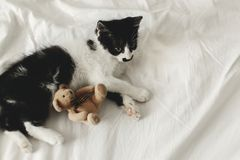 Cute little kitten playing with little teddy bear toy on white b stock image