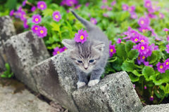 Cute little kitten playing on the summer meadow Stock Photography
