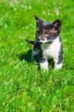 Cute little kitten. Portrait of a cute little kitten in the grass Stock Photo