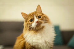Cute little kitten Royalty Free Stock Photography