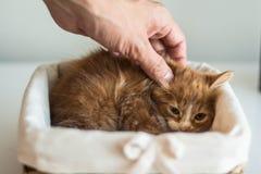 Cute little kitten Royalty Free Stock Images