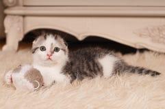 Cute little kitten Stock Photography