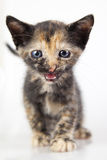 Cute little kitten. Shallow dof Royalty Free Stock Photo