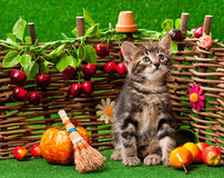 Cute little kitten Stock Image