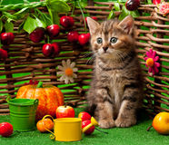 Cute little kitten Stock Photography
